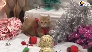 Kittens In Sweaters Play In Christmas Decorations