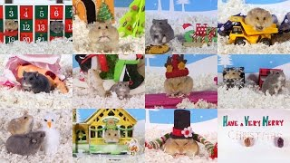 Cute Hamsters: Best of 12 Days of Christmas - Compilation
