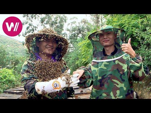 Honig Aus China: Umstrittene Herstellung Und Spektakuläre Marketingaktion