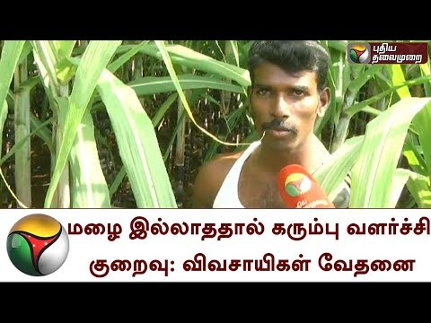 Farmers suffer due to low yield of Sugarcane; Also the price rate reduced in Dindigul