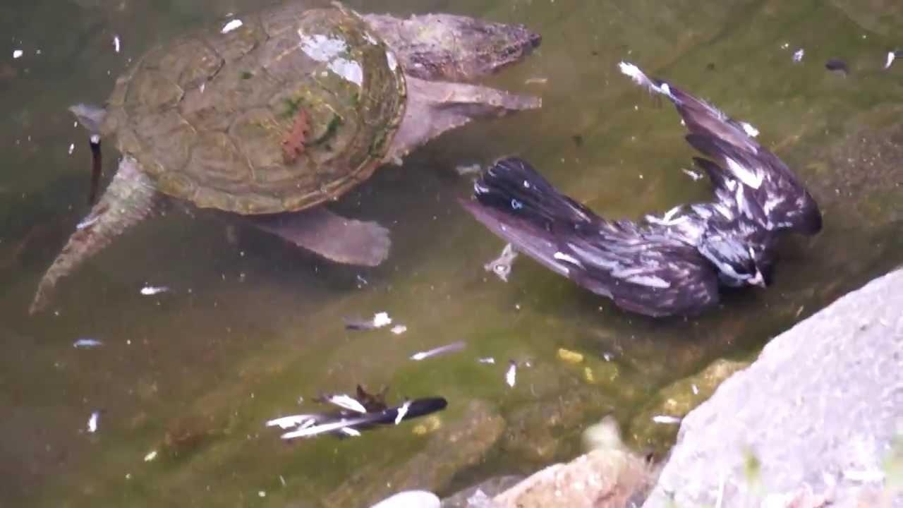what do ninja turtles eat