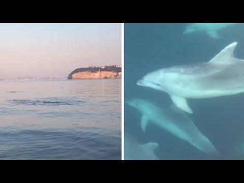 I delfini nel golfo di Napoli