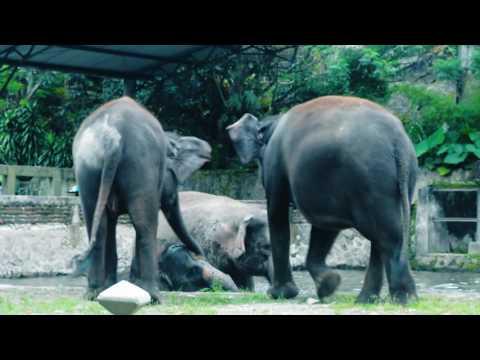 Video Klip Tulus Gajah