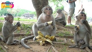 So happy female Milta so kind with sharing food to baby & others to eat | Monkey Daily 4430