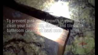 What is pink mold