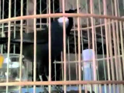 Khuou Mua Tung Canh xuanhaina video vietgiaitri com