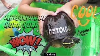 Video Asiknya ❤ Memandikan Kura kura dan Boneka Putri Duyung ❤ Tortoise Bathing with Mermaid Toy download MP3, 3GP, MP4, WEBM, AVI, FLV November 2017