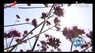 【江西哪里最好玩】高安巴洛夫拓展训练 20190616