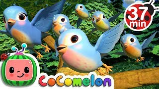 Gambar cover Five Little Birds 3 + More Nursery Rhymes & Kids Songs - CoCoMelon