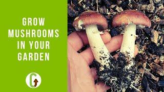 How To Grow Mushrooms In Your Garden (Outdoor Mushroom Beds)