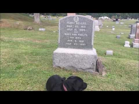 Dog Slept Next To His Owner S Grave