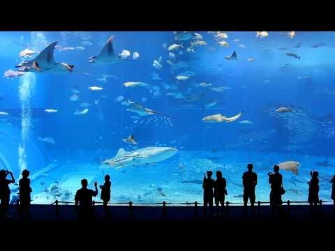 Full HD 1080p - Okinawa Churaumi Aquarium