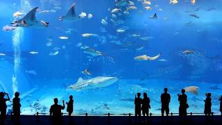 full hd 1080p okinawa churaumi aquarium