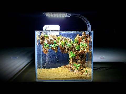 How To Build A Mini Desk Aquarium At Home