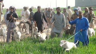 Gambar cover Shakar Hi Shakar in Attock