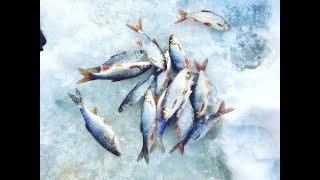 ЭТИ МОНСТРЫ РВУТ МОРМЫШКИ Зимняя рыбалка на малой реке