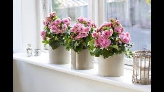 видео Про народные приметы о комнатных растениях