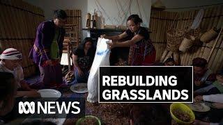 These Burmese refugees are helping rebuild Australian grasslands | ABC News