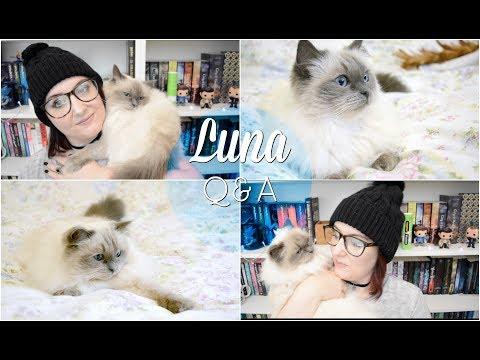 Meet My Cat - Luna Q&A - Adoption, Food, Toys? [CC] | The Book Life