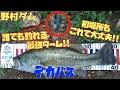 【必見】初場所は野村ダム!! 初心者でもデカバス釣れるワームとは・・・。(四国遠征Part4)