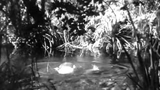 Video Tarzan and Jane swimming download MP3, 3GP, MP4, WEBM, AVI, FLV September 2017