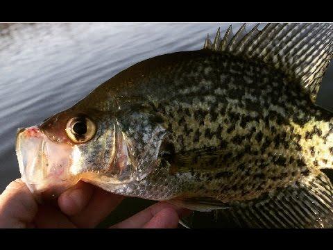 MN Bound Lake Minnetonka Crappie Contest (5/6) Fishing Forest Lake/Bay