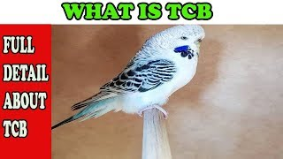 WHAT IS TCB (TEXAS CLEAR BODY) l URDU/HINDI