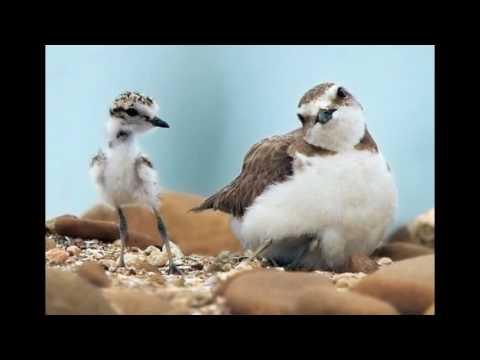 Смешные и наглые птицы -