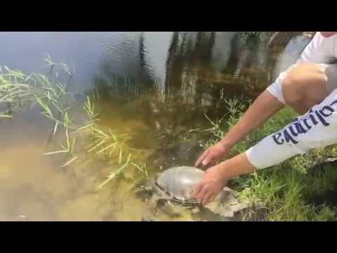Fly River Turtles New Home : Kamp Kenan Bonus