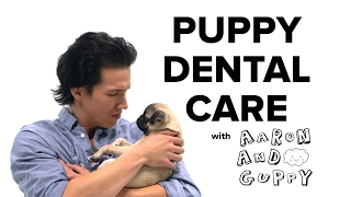 PetSmart Puppy Training: Dental Care