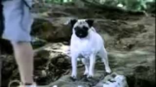 Hutch Old Ad Pug Dog In Bridge