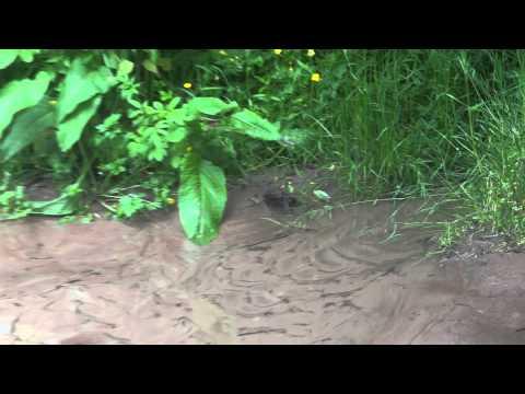 Underground water pouring up thru the sand.