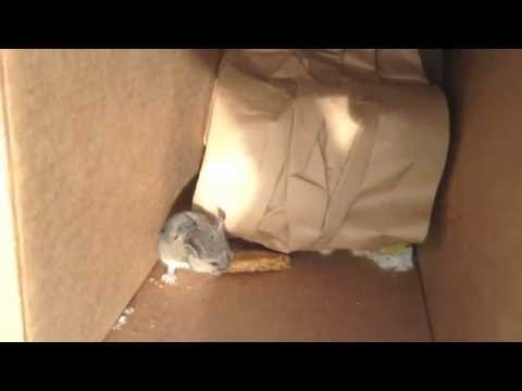 Hungry Mouse Found in Trash Can at Work