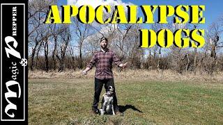 Apocalypse Dogs: Best Dog Breeds for SHTF
