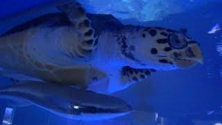 롯데월드 아쿠아리움 - 바다거북이와 정어리, Sea t…