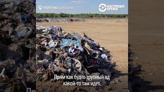 Новая свалка в Егорьевске