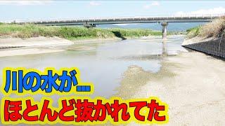 干上がりかけた川で大物がかかった!
