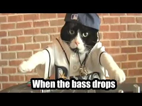 LOL Cats Official - When the bass Drops