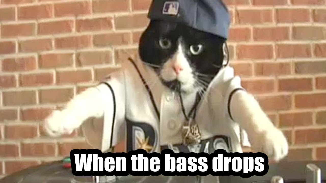 Lol Cats Official When The Bass Drops Youtube