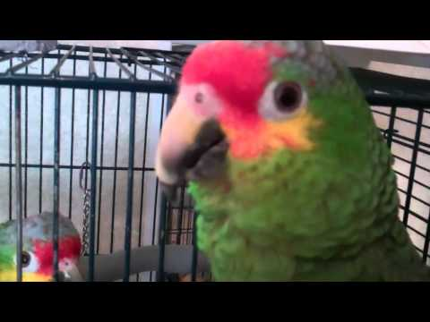 Red lored amazon.mp4