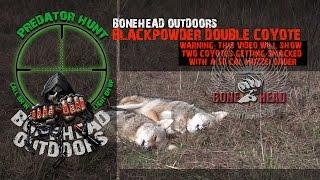 Black powder - muzzleloader double coyote predator kill (BONEHEAD Outdoors)