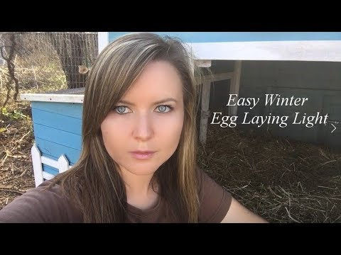 Easy $10. Winter Egg Laying Solar Lights Idea