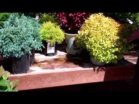 shrubs small spaces