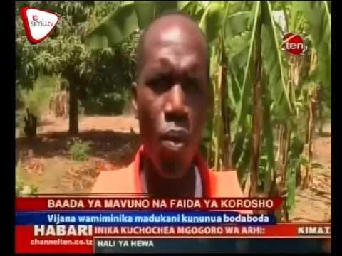 Zao La Korosho Lawapa Mafanikioa Vijana Mtwara