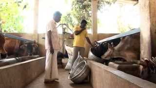 TMR(Total Mixed Ration) FEED IN KERALA