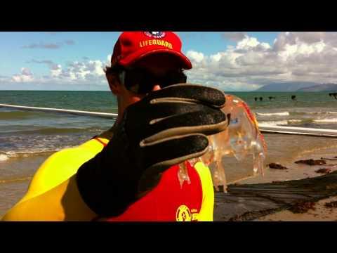 STINGERS - Box Jellyfish In Port Douglas