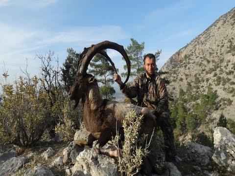 BEZOAR IBEX HUNTING MR.MURAT OZHAN &  RECEP ECER