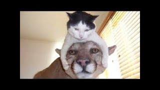 funny video // Amazing animals