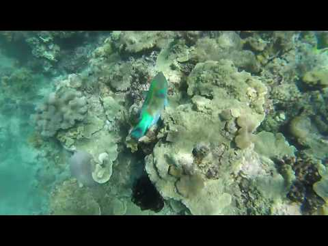 2018 February 18: The Great Barrier Reef