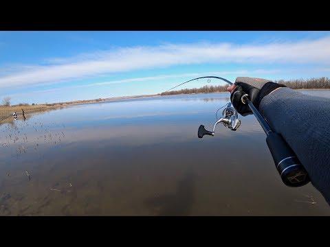 Наглость Браконьеров Поражает! ОГО, сколько здесь рыбы! Рыбалка на спиннинг.